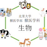 【生物】北里大学獣医学部を徹底分析 | 獣医学科ならプロ家庭教師のロジティー