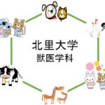北里大学の獣医学科を徹底分析 | 獣医学科ならロジティー